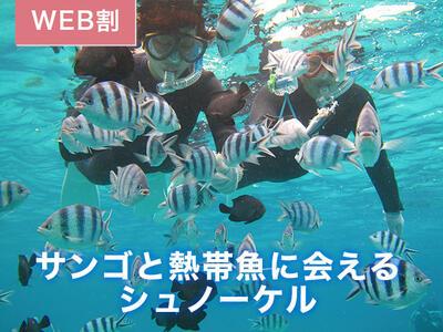 サンゴと熱帯魚シュノーケル