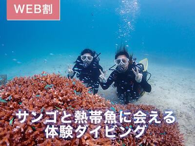 サンゴと熱帯魚体験ダイビング
