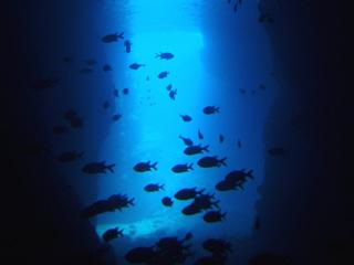 青の洞窟シュノーケリング⑤