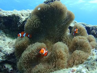 熱帯魚シュノーケリング④