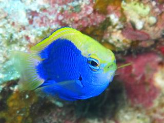 熱帯魚シュノーケリング⑤