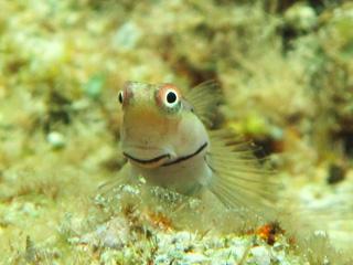 熱帯魚シュノーケリング⑥