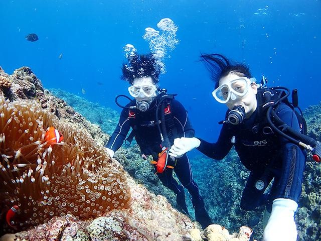 熱帯魚体験ダイビング②