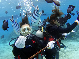 熱帯魚体験ダイビング④