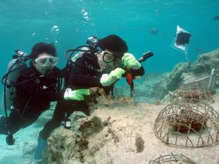 サンゴの植付体験けダイビング④