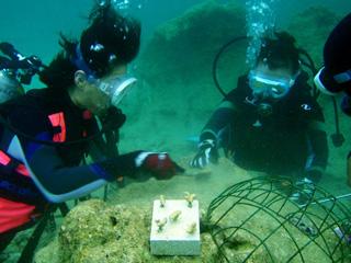 サンゴの植付体験けダイビング⑤