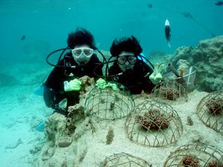 サンゴの植付体験けダイビング⑥