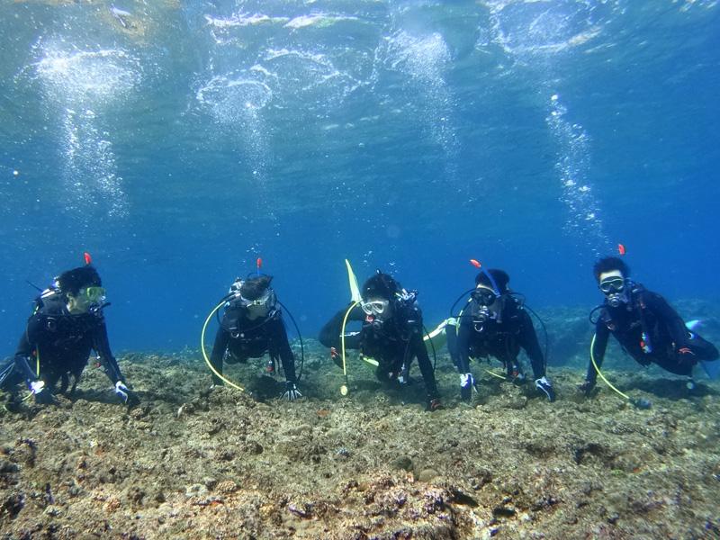 学科講習・限定水域講習・海洋実習(1ダイブ)