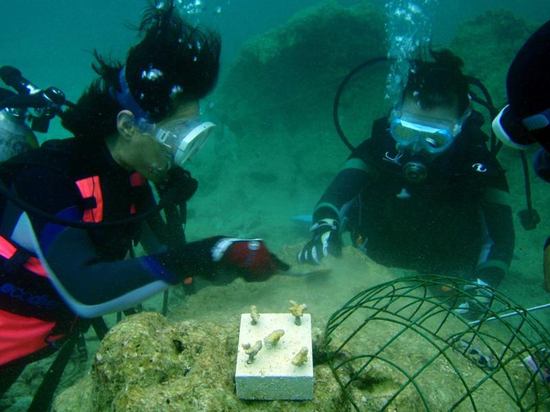 サンゴの植付け作業開始!