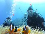 【ドライスーツ着用】サンゴと熱帯魚に会えるシュノーケリング