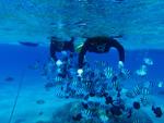 サンゴと熱帯魚に会えるボートシュノーケリングツアー(餌付け付)