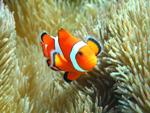 サンゴと熱帯魚に会えるボート体験ダイビングツアー(餌付け付)