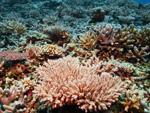 サンゴの植付け体験ダイビング
